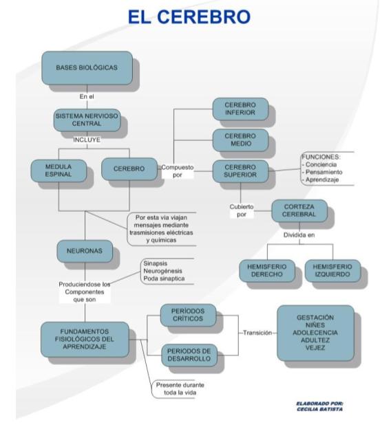 Increíble Diagrama De La Función Cerebral Cresta - Anatomía de Las ...